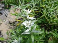 夏の美ヶ原高原で咲く高山植物の花々