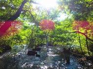 上高地キャンプ3日目。明神池の奥が神秘的!岳沢湿原にも感動。