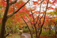 11月中旬の筑波山は、落葉多く、紅葉は僅かでした。