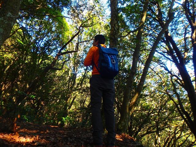 11月の紅葉の筑波山 白雲橋コースを登ってきました♪