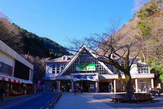 1月末、高尾山の山頂付近に小さなシモバシラ咲いていました