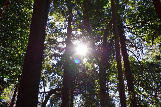 筑波山 木漏れ日