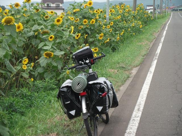cycle217.jpg