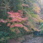 11月末、紅葉の高尾山6号路を歩く