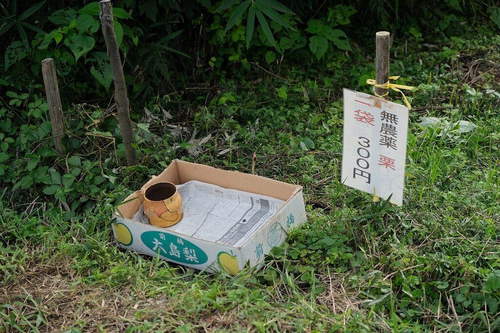 日和田山 栗園