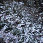 年始の高尾山6号路は登山道が凍結で転倒者も、下りは避けるのが吉