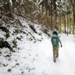 【2月上旬高尾山】枝や葉の上の雪が解け、雫が雨の用に降り続いていました