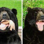 リアルすぎる熊の・・